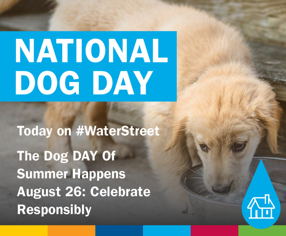 The Dog DAY Of Summer Happens August 26: Celebrate Responsibly