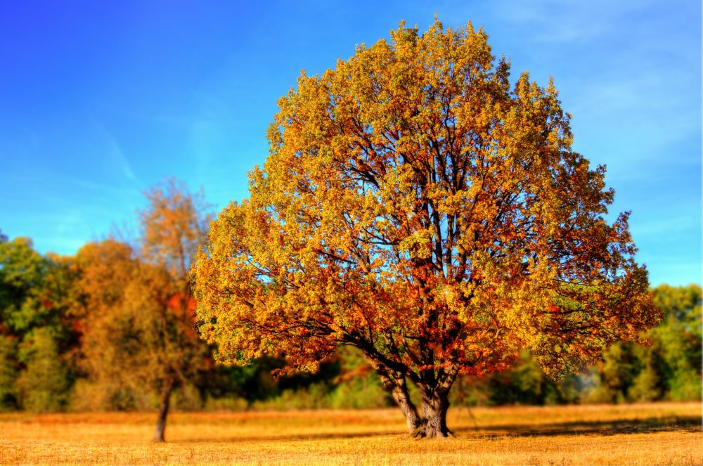 Orange, Gold, Red, Purple, Yellow: Looking Forward to This Autumn's Colors
